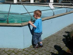 Liten gutt myser over kanten på sjøløvebassenget på Akvariet i Bergen