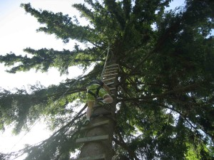 Barn klatrer plankestige rett opp et tre, sikret